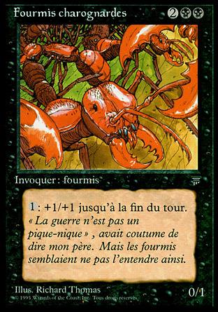 Carrion Ants (Fourmis charognardes)