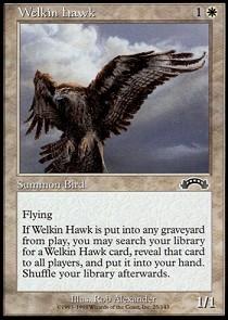 Welkin Hawk