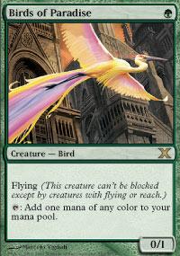 Birds of Paradise - Foil